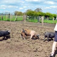 AIdan Pig Tamer