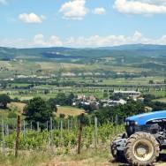 Cimicchi Farm