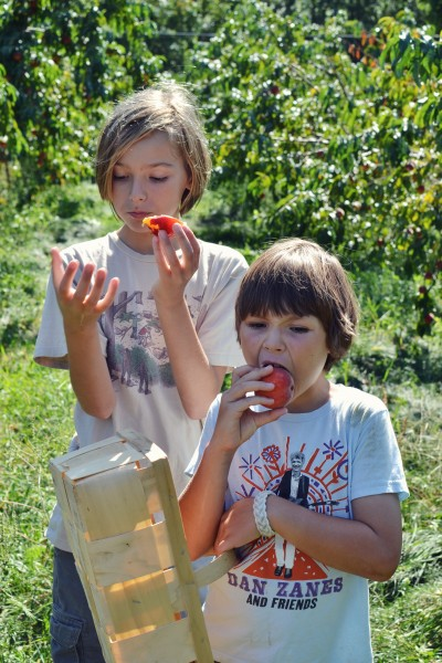 Aidan and Augie sample the peaches
